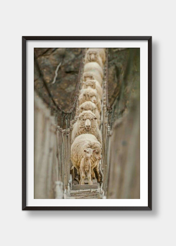 Sheep on a bridge
