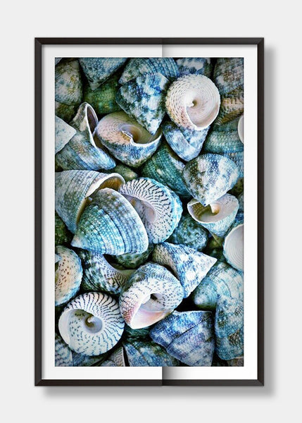 Sea shell blue