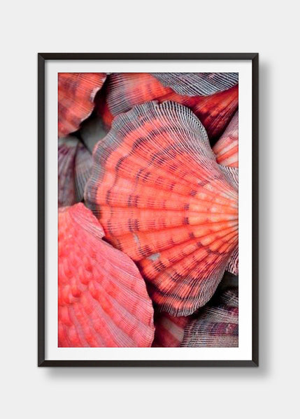 Sea shell red