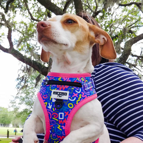Retro Pet Squiggles Dog Harness