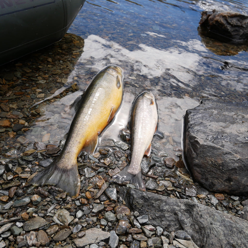 Highland Mountain Fishing for Great Arctic Char - Arctic