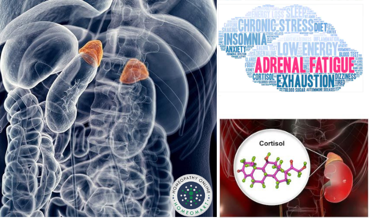 Meet Mr. Adrenal Gland - your very own mini chemical plant