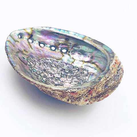 Abalone Shell - large - Artisan Collective