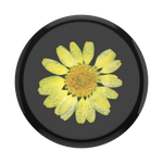 Pressed Flower Yellow Daisy, PopSockets