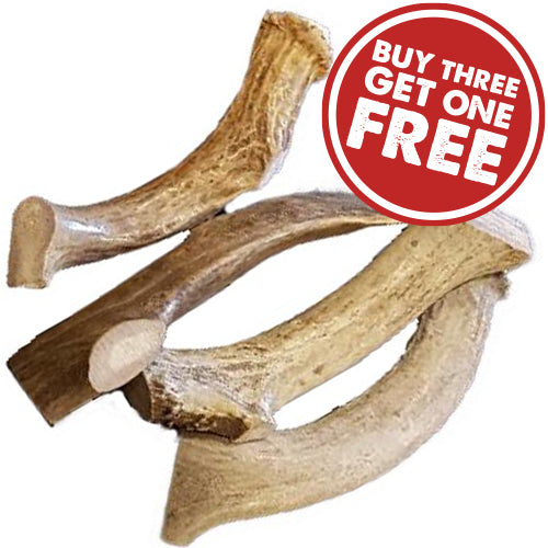 Organic & Natural Deer Antlers - Medium