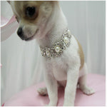 Bling Rhinestone Pearl Necklace Dog Collar