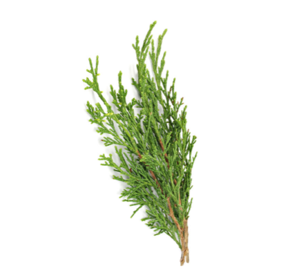 dōTERRA Cypress Essential Oil - 15ml