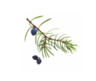 dōTERRA Juniper Berry Essential Oil - 5ml