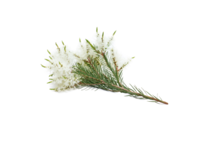 dōTERRA Tea Tree (Melaleuca) Essential Oil - 15ml
