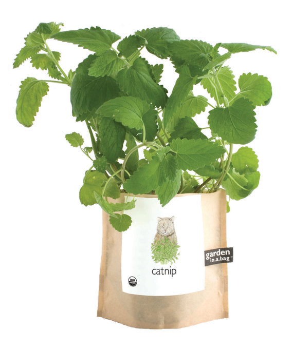 Catnip Garden In A Bag Grow Kit