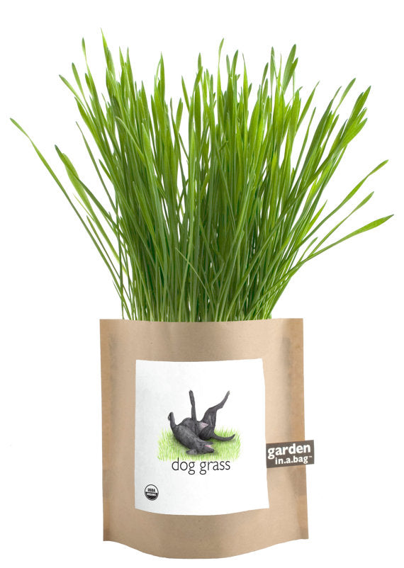 Dog Grass Garden – Barley Grass In A Bag Grow Kit