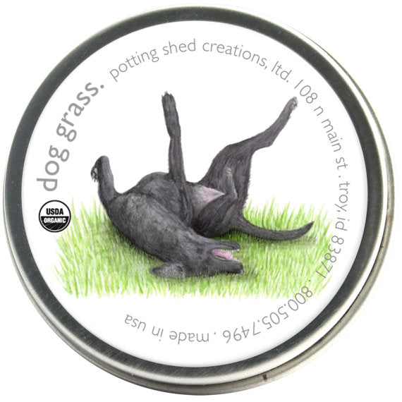 Dog Grass Barley - Pet Garden Sprinkles Seed Collection
