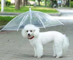Umbrella Dog Leash: Never Leave Your Dog Out In The Rain Again!
