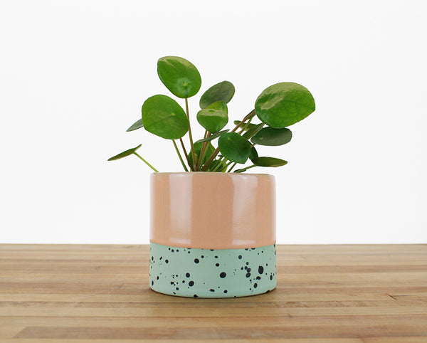 4 inch Dipped and Dotted Cylinder Planter with or without Saucer