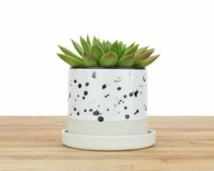 Seconds - 4 inch Spotted Glaze Cylinder Planter with or without Saucer