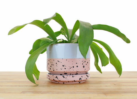 6 inch Cylinder Planter - Dipped and Dotted Periwinkle over Blush