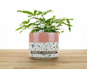 6 inch Cylinder Planter - Dipped and Dotted Pink over Cream