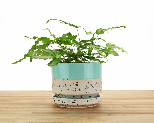6 inch Cylinder Planter - Dipped and Dotted Mint over Peach