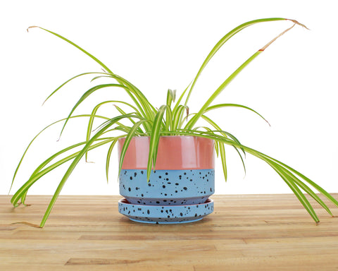 6 inch Cylinder Planter - Dipped and Dotted Pink over Sky
