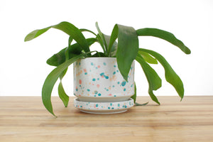 6 inch Cylinder Planter - Tropical Spots