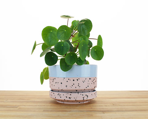 8 inch Cylinder Planter - Dipped and Dotted Periwinkle over Blush
