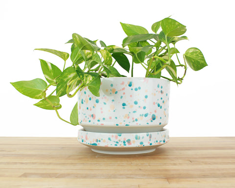 8 inch Cylinder Planter - Tropical Spots