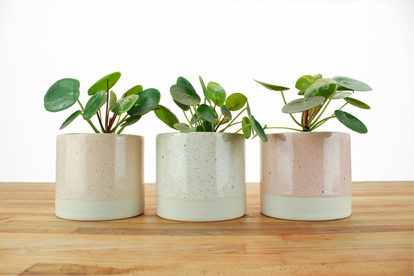 4 inch Cylinder Planter with Saucer - Speckled Glaze