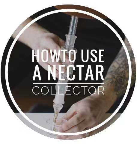 How To Use A Nectar Collector | Dabbing 101 | Puffing Bird Wiki
