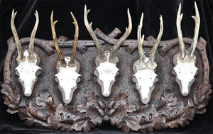 Roe Deer Mount 5 Trophy Plaque