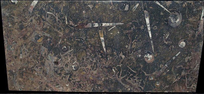 Rectangle Fossil Marble Table #3