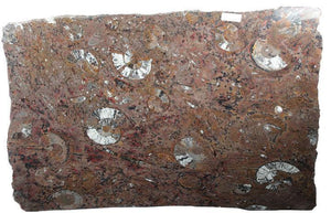 "Polished Ammonite & Orthoceras Red Macro Fossil Table Top #1C (49.5"" x 34"") {Contact For Price}"