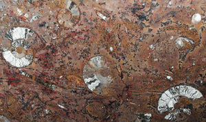 Polished Ammonite & Orthoceras Red Macro Fossil Table Top #1C