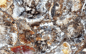 Mosaic Petrified Wood Slab #2