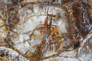 Mosaic Petrified Wood Slab #4