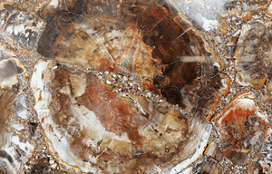 Mosaic Petrified Wood Slab #5