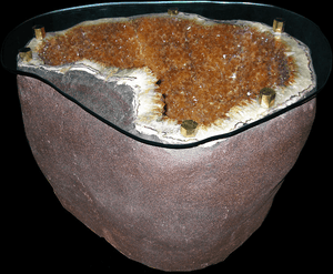 Citrine Geode Table