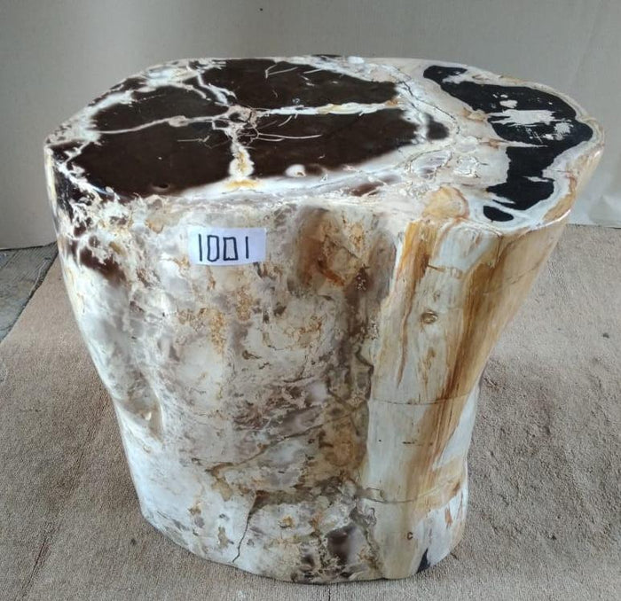 Petrified Wood Side Table #1001-EI