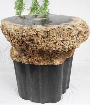 RARE Petrified Coconut Palm Side Table #903-EH