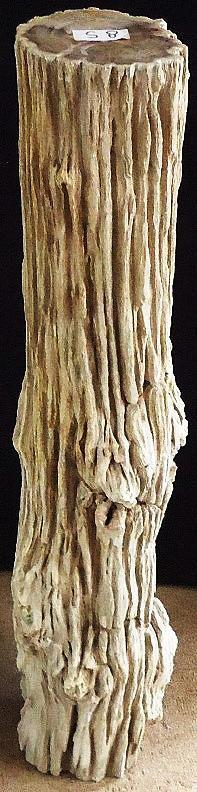 Petrified Wood Sculpture #008-B-EH