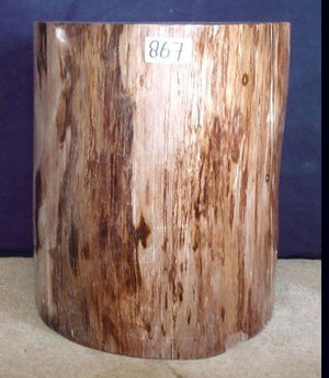 Petrified Wood Side Table #867-EH