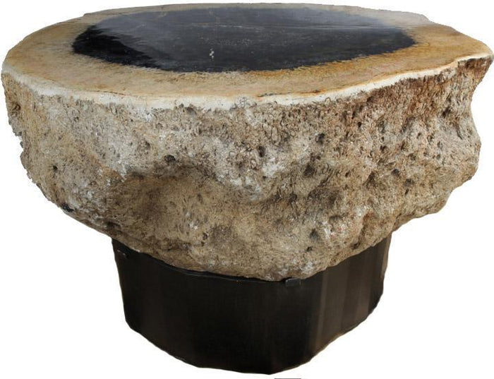 RARE Petrified Coconut Palm Coffee Table #905-EH Steel Base
