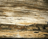 "GIANT Petrified Wood Slab #1-EH 84"" x 33""-29 x 2"" Petrified Teak {Contact For Price}"