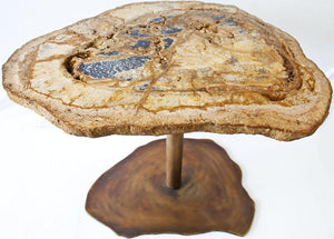 RARE Gem Petrified Coconut Palm Table Top #6 {25