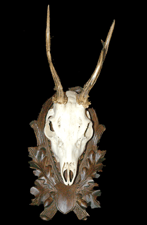 Black Forest Roe Deer Trophy on Carved Panel #1