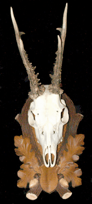 Black Forest Roe Deer Trophy on Carved Panel #2