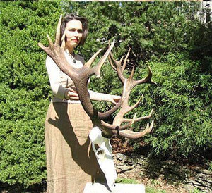 Red Stag Trophy #101