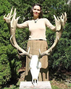 Red Stag Trophy #107 22 Points {FREE SHIPPING!}