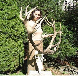 Red Stag Trophy #115