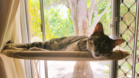 Sunny Seat Cat Bed