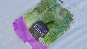Gem Cos Lettuce (Pack of 2)